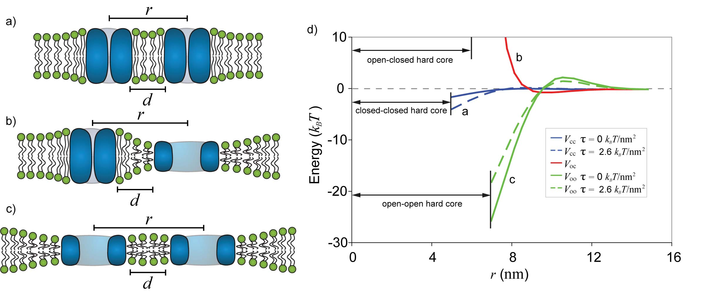 Elastic Interactions of Neighboring Proteins
